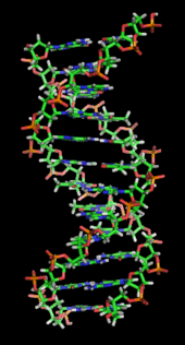 DNA The Junk in Your Genetic Trunk