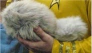 parsons1 The Science of Star Trek:   The Trouble with Tribbles